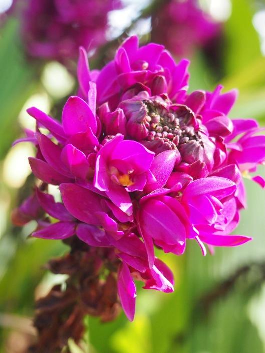 purpleygoodness